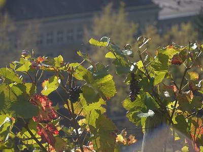 @RobAng November 2014 - Lindberg (Winterthur)