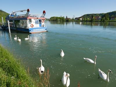 @RobAng Mai 2016 / Waldshut-Tiengen, Waldshut-Tiengen, Baden-Württemberg, DEU, Deutschland, 320 m ü/M, 2016/05/05 17:28:12