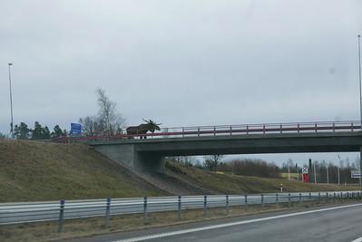 @RobAng 19.03.17, 13:54: Klint, Strömsnäsbruk, Kronoberg, Schweden (SWE)
