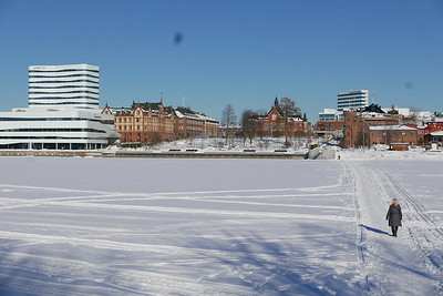@RobAng 06.03.17, 12:35: Teg, Umeå, Västerbotten, Schweden (SWE)