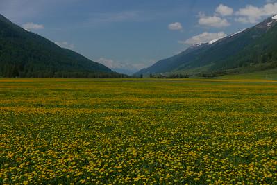 @RobAng 29.05.17, 10:41: Obergesteln, 1353 m, Obergesteln, Canton du Valais, Schweiz (CHE)