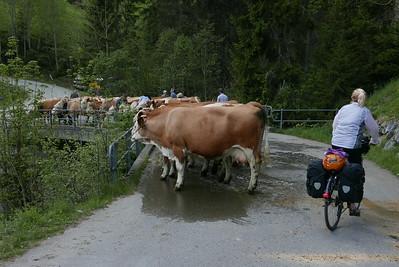 @RobAng 27.05.17, 11:27: Balteli, 1329 m, Abländschen, Kanton Bern, Schweiz (CHE)