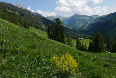 @RobAng 27.05.17, 10:16: Underi Bire, 1417 m, Abländschen, Kanton Bern, Schweiz (CHE)
