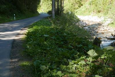 @RobAng 27.05.17, 09:12: Bruch, 1210 m, Abländschen, Kanton Bern, Schweiz (CHE)