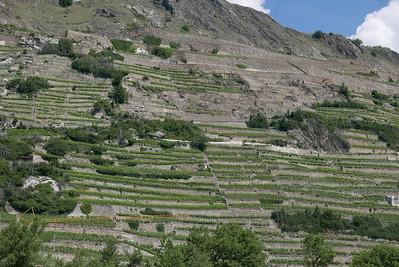 @RobAng 28.05.17, 11:20: Champlan, 493 m, Champlan (Grimisuat), Canton du Valais, Schweiz (CHE)