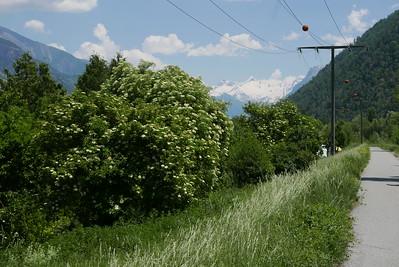 @RobAng 28.05.17, 13:35: Gampel, 627 m, Niedergampel, Canton du Valais, Schweiz (CHE)