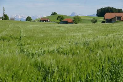@RobAng 25.05.17, 17:40: Oberbütschel, 929 m, Kaufdorf, Kanton Bern, Schweiz (CHE)