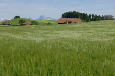 @RobAng 25.05.17, 17:38: Oberbütschel, 929 m, Kaufdorf, Kanton Bern, Schweiz (CHE)