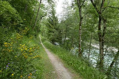 @RobAng 01.06.17, 15:28: Danis, 805 m, Danis, Kanton Graubünden, Schweiz (CHE)