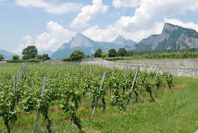 @RobAng 02.06.17, 13:31: Maienfeld GR, 537 m, Maienfeld, Kanton Graubünden, Schweiz (CHE)