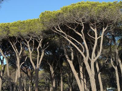 @RobAng 17.09.17, 17:17: Maremma Nationalpark, 4 m, Alberese - Cala di Forno, Toscana, Italien (ITA)