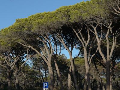 @RobAng 17.09.17, 17:18: Maremma Nationalpark, 4 m, Alberese - Cala di Forno, Toscana, Italien (ITA)