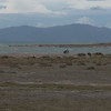 @RobAng 18.09.17, 13:17: Maremma Nationalpark, 0 m, Alberese - Principina a Mare, Toscana, Italien (ITA)
