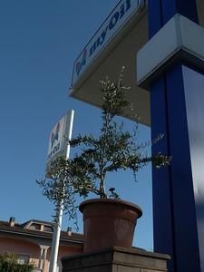 @RobAng 21.09.17, 16:40: Lucchesi, 18 m, Fucecchio, Toscana, Italien (ITA)