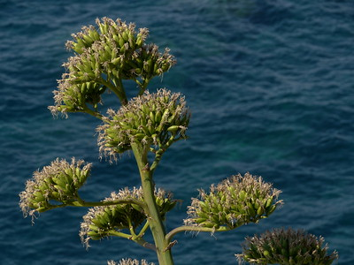 @RobAng 22.09.17, 12:06: Manarola, 26 m, Manarola, Liguria, Italien (ITA)