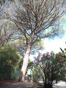 @RobAng 12.09.17, 09:53: Roccamare, 10 m, Castiglione Della Pescaia, Toscana, Italien (ITA)