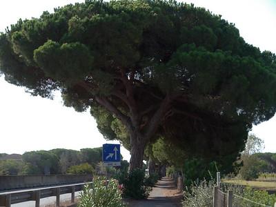 @RobAng 13.09.17, 09:15: Albinia, 4 m, Albinia, Toscana, Italien (ITA)