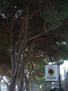 @RobAng 13.09.17, 09:12: Albinia, 3 m, Albinia, Toscana, Italien (ITA)