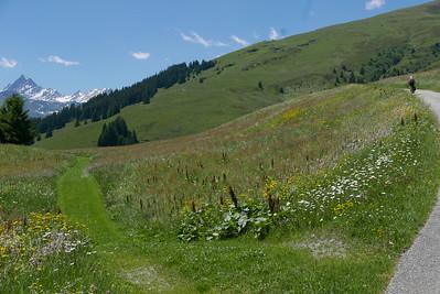@RobAng 17.06.17, 13:12: Lumbrein, 1664 m, Vignogn, Kanton Graubünden, Schweiz (CHE)
