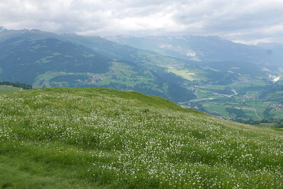 @RobAng 16.06.17, 17:09: Bündner Rigi / Surcuolm, 1607 m, Morissen, Kanton Graubünden, Schweiz (CHE)