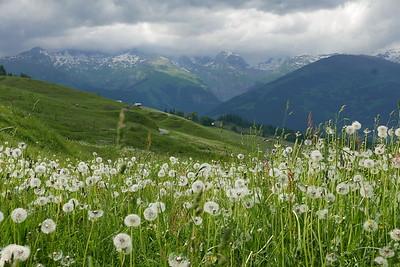 @RobAng 16.06.17, 17:11: Bündner Rigi / Surcuolm, 1607 m, Luven, Kanton Graubünden, Schweiz (CHE)