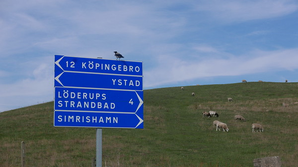 @RobAng 04.09.18, 15:51: Margretevall, Löderup, Skåne, Schweden (SWE), 41.4387 m