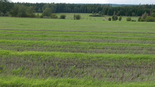 @RobAng 09.09.18, 16:30: Torlunda, Timmele, Västra Götaland, Schweden (SWE), 253.034 m
