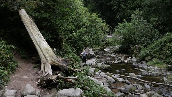 @RobAng 06-Sept.-20 10:24:07: Malschbach, 300 m, Baden-Baden, Baden-Württemberg, Deutschland (DEU)