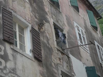 @RobAng Sept. 2014 / Kotor, , Kotor, MNE, Montenegro, 31 m ü/M, 01/09/2014 11:46:18