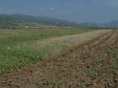 @ Aug. 2014 / ???? ???, Matejce, , MKD, Mazedonien, 536 m ü/M, 26/08/2014 10:16:31