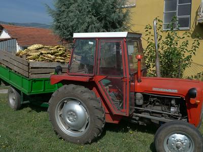 @RobAng Aug. 2014 / ???? ???, Matejce, , MKD, Mazedonien, 506 m ü/M, 26/08/2014 10:06:08