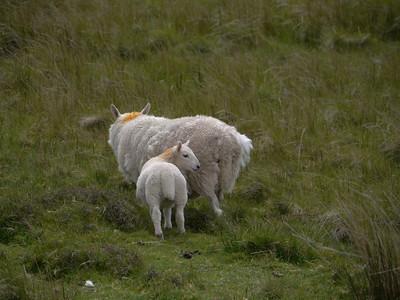 @RobAng Juni 2015 / Flodigarry, Isle of Skye / Flodigarry  (Inner Hebridies), Scotland, GBR, Grossbritanien / Great Britain, 83 m ü/M, 2015/06/20 13:18:06