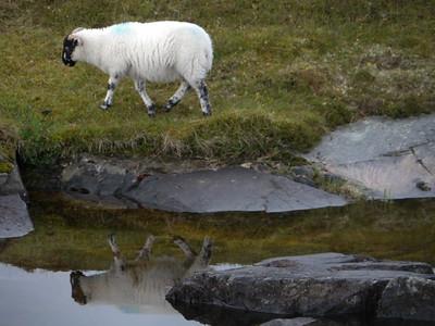@RobAng Juni 2015 / Scalpay Village, Harris (Western Isles/Outer Hebridies) /  Na Hearadh agus Ceann a Deas nan, Scotland, GBR, Grossbritanien / Great Britain, 6 m ü/M, 2015/06/21 10:25:33