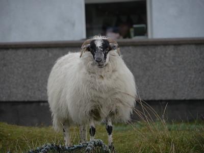 @RobAng Juni 2015 / Scalpay Village, Harris (Western Isles/Outer Hebridies) /  Na Hearadh agus Ceann a Deas nan, Scotland, GBR, Grossbritanien / Great Britain, 6 m ü/M, 2015/06/21 10:26:43