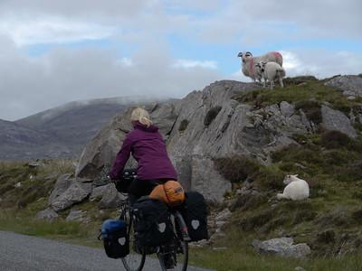 @RobAng Juni 2015 / Tarbert, Harris (Western Isles/Outer Hebridies) /  Na Hearadh agus Ceann a Deas nan, Scotland, GBR, Grossbritanien / Great Britain, 84 m ü/M, 2015/06/21 11:39:39