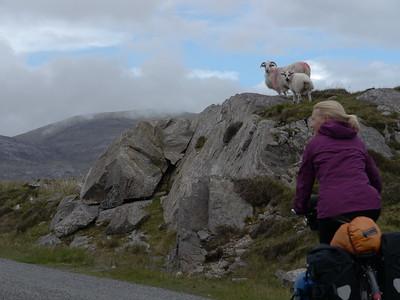 @RobAng Juni 2015 / Tarbert, Harris (Western Isles/Outer Hebridies) /  Na Hearadh agus Ceann a Deas nan, Scotland, GBR, Grossbritanien / Great Britain, 84 m ü/M, 2015/06/21 11:39:38