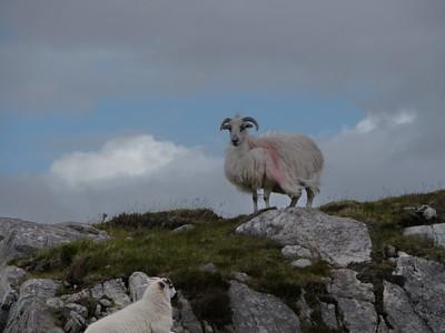@RobAng Juni 2015 / Tarbert, Harris (Western Isles/Outer Hebridies) /  Na Hearadh agus Ceann a Deas nan, Scotland, GBR, Grossbritanien / Great Britain, 81 m ü/M, 2015/06/21 11:38:06