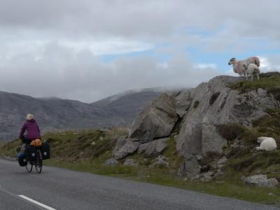 @RobAng Juni 2015 / Tarbert, Harris (Western Isles/Outer Hebridies) /  Na Hearadh agus Ceann a Deas nan, Scotland, GBR, Grossbritanien / Great Britain, 84 m ü/M, 2015/06/21 11:39:46