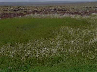 @RobAng Juni 2015 / Aird Tong, Lewis (Western Isles/Outer Hebridies) /  Loch a Tuath Ward, Scotland, GBR, Grossbritanien / Great Britain, 103 m ü/M, 2015/06/22 15:17:59