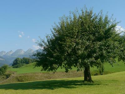 @RobAng 2012 / Krummenau, Krummenau, Kanton St. Gallen, CHE, Schweiz, 748 m ü/M, 01.08.2012 17:25:11