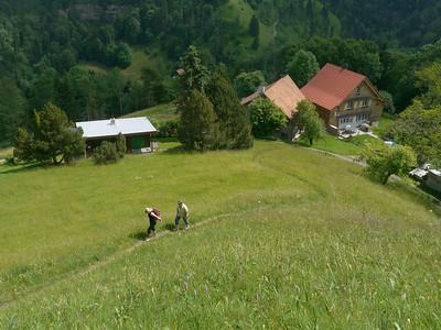 PFINGST-SPAZIERGANG AUFS SCHNEBELHORN: Orüti bei Steg - Tierhag - Schnebelhorn - Orüti. © RobAng 2011. Füliweid, Steg im Tösstal, Kanton Zürich, Schweiz, 1014 mm