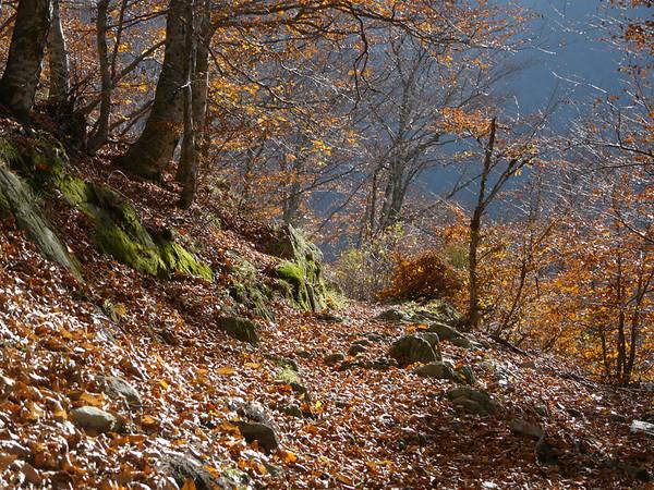 @RobAng 2012,  Rasa, Rasa, Cantone Ticino, CHE, Schweiz, 1010 m ü/M, 15.11.2012 12:55:30