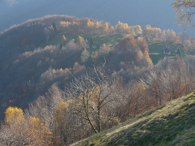 @RobAng 2012,  Rasa, Rasa, Cantone Ticino, CHE, Schweiz, 798 m ü/M, 15.11.2012 12:46:12