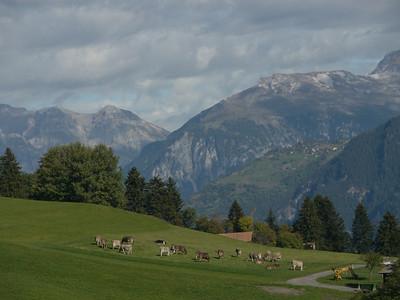 @RobAng 2013 / Flerden, Masein, Kanton Graubünden, CHE, Schweiz, 1123 m ü/M, 2013/10/03 11:23:23