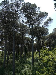 @RobAng, Juni  2013 / Case del Bevano, Lido Di Classe, Emilia-Romagna, ITA, Italien, 5 m ü/M, 2013/06/12 12:50:38