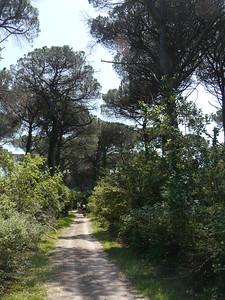 @RobAng, Juni  2013 / Case del Bevano, Fosso Ghiaia, Emilia-Romagna, ITA, Italien, 3 m ü/M, 2013/06/12 12:45:44