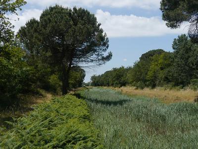 @RobAng, Juni  2013 / Borgo Fosso Ghiaia, Fosso Ghiaia, Emilia-Romagna, ITA, Italien, 4 m ü/M, 2013/06/12 12:21:38