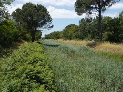 @RobAng, Juni  2013 / Borgo Fosso Ghiaia, Fosso Ghiaia, Emilia-Romagna, ITA, Italien, 3 m ü/M, 2013/06/12 12:21:14