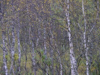 @RobAng 2012 / Forsa, Ballangen, Nordland, NOR, Norwegen, 95.764 m ü/M, 16/09/2012 15:55:30