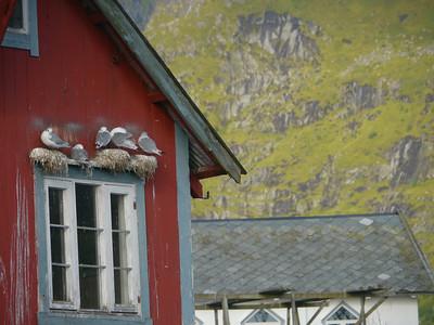 Velotour Lofoten-Vesterålen-Narvik  / @RobAng 2012  / Å i Lofoten, Sørvågen, Nordland, Lofoten, NOR, Norwegen, 0 m ü/M, 09/09/2012 10:20:30